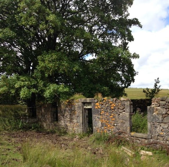 Greenburn Cottage.  Ruin on the Douglas and Angus Estate.  Photo 2015